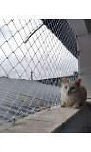 Empresa da tela de proteção para animais